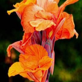 Patrick Witz - Flamboyant Orange Cannas