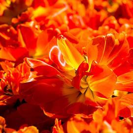 Alexander Senin - Flames Of Spring - 11