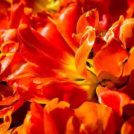 Alexander Senin - Flames Of Spring - 12