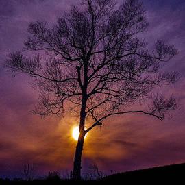 Marty Saccone - Flaming Tree