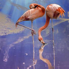 Bill Tiepelman - Flamingo Fantasy Lights