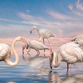 Brian Tarr - Flamingo Lagoon