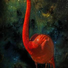 James Bethanis - Flamingo no 1