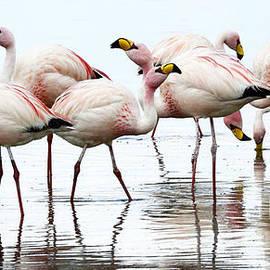 Bob Christopher - Flamingos Bolivia 1