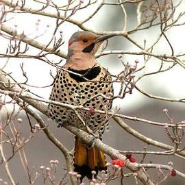 Travis Truelove - Flicker - Alabama State Bird - Attention