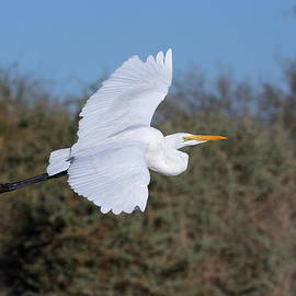 Ruth Jolly - Flight of an Egret
