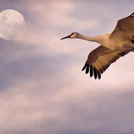 Priscilla Burgers - Flight of the Crane