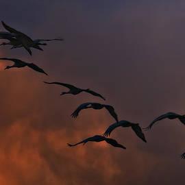 Priscilla Burgers - Flight of the Cranes