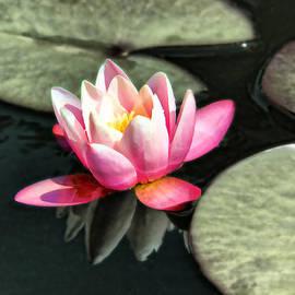 Mariola Bitner - Floating Lily