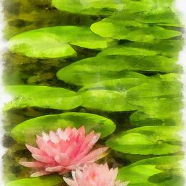 Michael Flood - Floating Lotus Blossoms