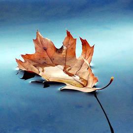 David T Wilkinson - Floating Oak Leaf