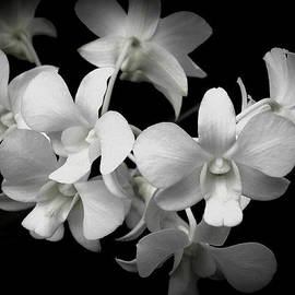 Kristin  Hoerter - Floating Orchids