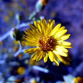 Chris Gudger - Floating Yellow