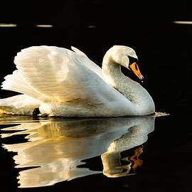 Rose-Maries Pictures - Floats on peaceful water