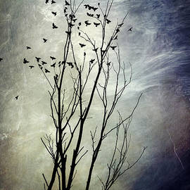 Christina Rollo - Flock Of Birds In Silhouette