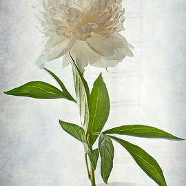 Maggie Terlecki - Floral Conversation
