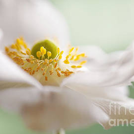 Jacky Parker - Floral Dance