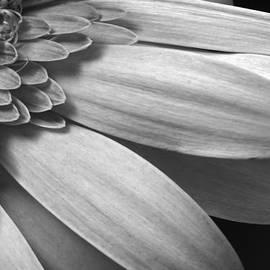 Dawn Currie - Floral Detail