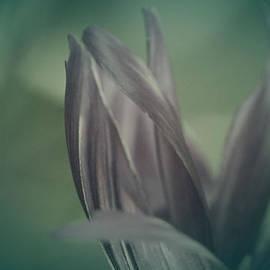 The Art Of Marilyn Ridoutt-Greene - Floral Fantasy