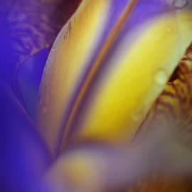 Jenny Rainbow - Floral Healer. Iris Macro