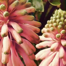 Douglas MooreZart - Floral in the Pink