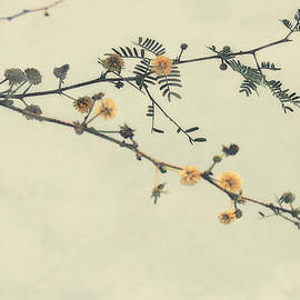 Irina Davis - Floral