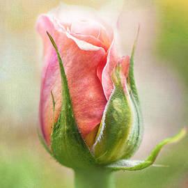 Sarah-fiona  Helme - Floral Poetry
