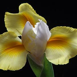 Juergen Roth - Floral Roar