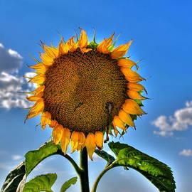 Larry Trupp - Floral Sunshine