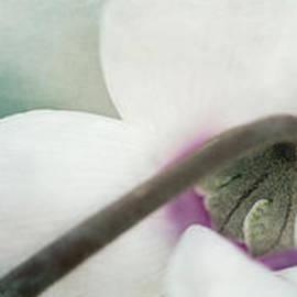 Priska Wettstein - Floral Whites