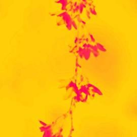 Sonali Gangane - Florets in Ochre