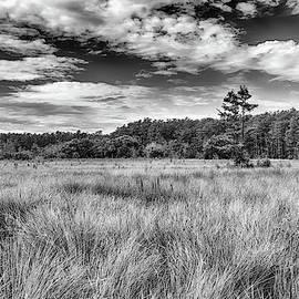 George Buxbaum - Florida SawGrass Prairie