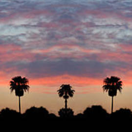 Bill Cannon - Florida Sunset Panorama