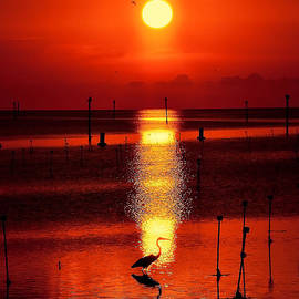 Stuart Harrison - Florida Sunset