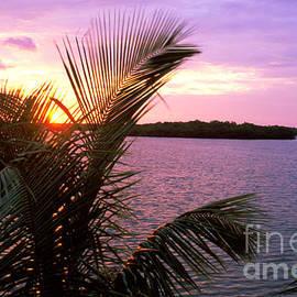 Thomas Levine - Florida Sunset