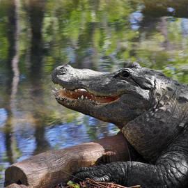 Christine Till - Florida - Where the Alligator smiles