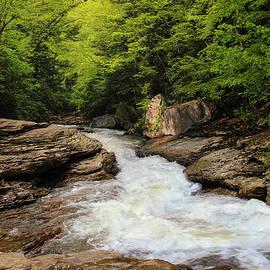 Rachel Cohen - Flow of Forest Zen