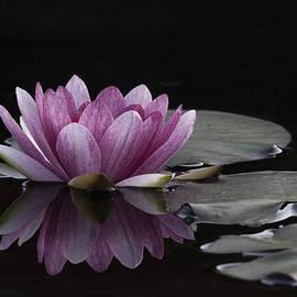 David Kehrli - Flower Afloat