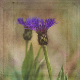 Jordan Blackstone - Flower Art - Waiting For Others