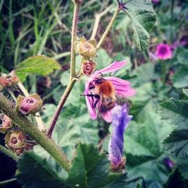 Deimantas Strolia - #flower #bumblebee #bee #macro #evening