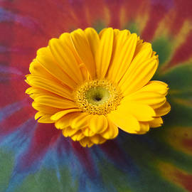 Christi Kraft - Flower Child