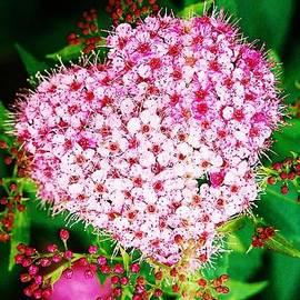 Daniel Thompson - Flower Heart