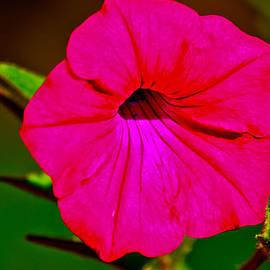 Bryan Hanson - Flower - Hot Pink