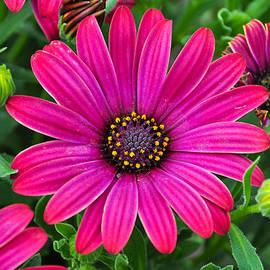 Bryan Hanson - Flower- Hot Pink Flower