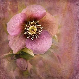 Ivelina  Aasen - Flower