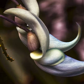 Julie Palencia - Flower of a Jade Vine