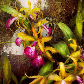 Mike Savad - Flower - Orchid - Cattleya - There
