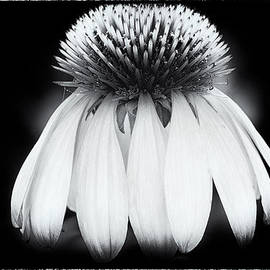 Pauline Michaud - Vintage Flower