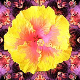 Joseph J Stevens - Flower Pink to Yellow