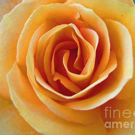 Brooks Garten Hauschild - Flower Power